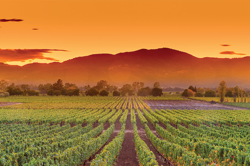 image Etats Unis Californie Napa Valley 58 it_494416494