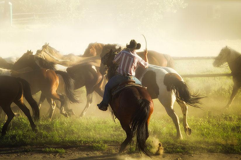 image Etats Unis Cow boys conduire troupeau ranch  it