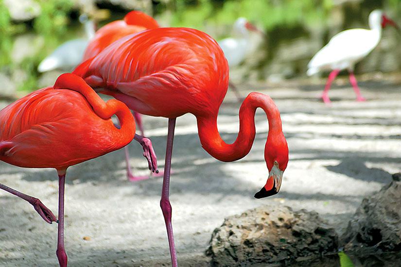 image Etats Unis Everglades Flamant rose  it
