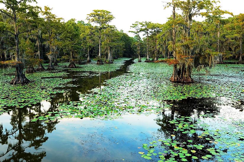 image Etats Unis Louisiane Cypress Swamp  it
