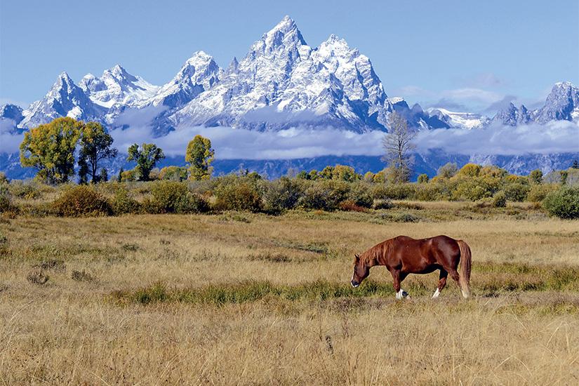 image Etats Unis Wyoming Cheval et Grand Teton 68 it_491412598