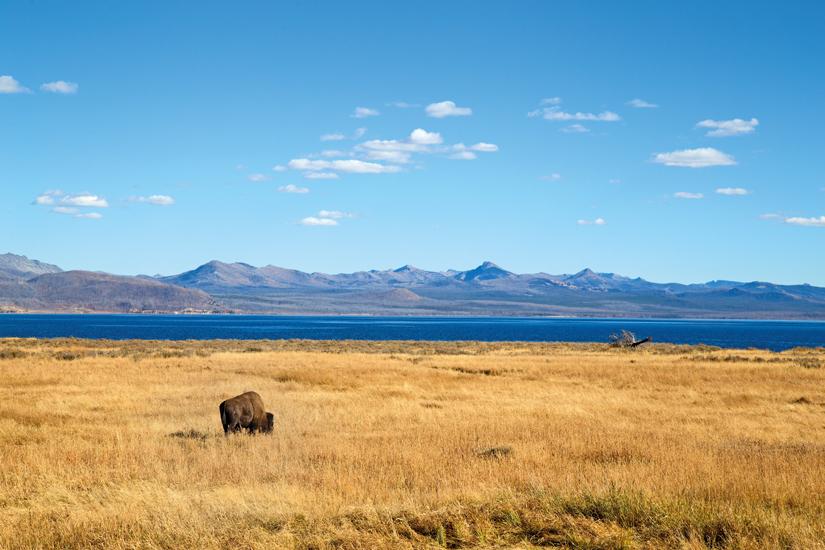 image Etats Unis bison 31 as_170109758