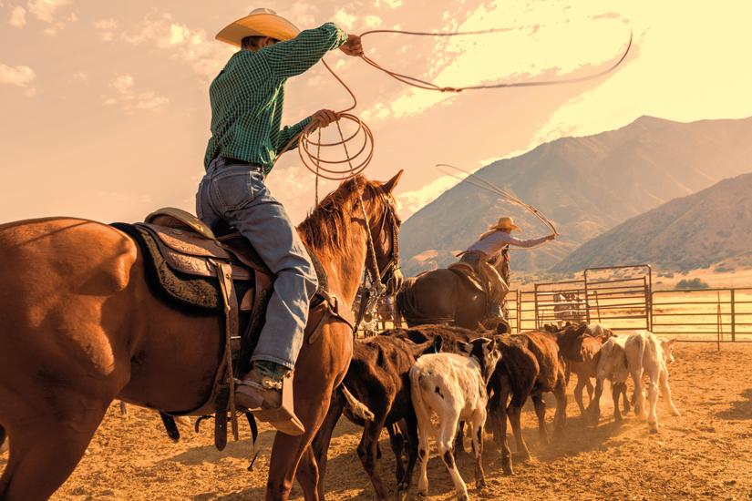 image Etats Unis cowboy 81 it_855086054