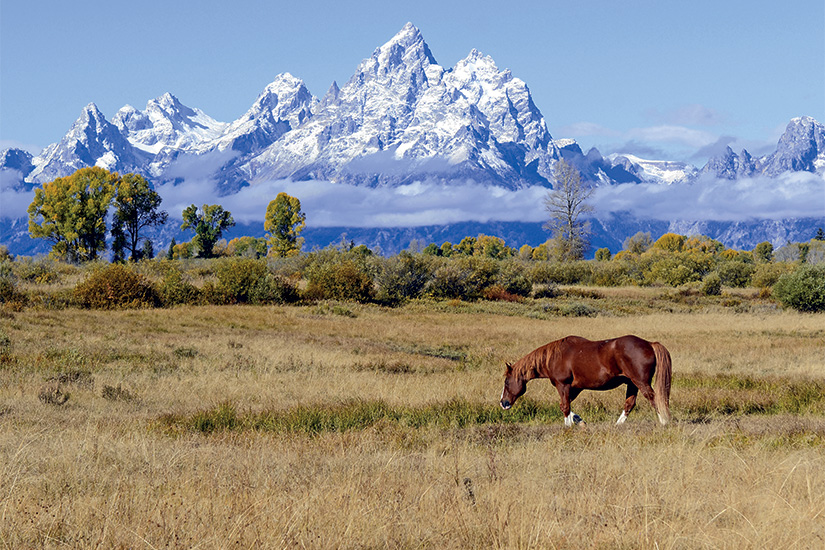 (image) image Cheval et grand teton Teton Range Wyoming Etats Unis 85 it 491412598