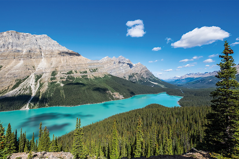 (image) image Lac Peyto parc national Banff 18 as_91063318